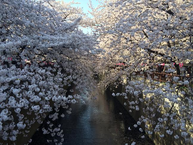 ワーホリ後は日本での就活を選択