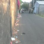 バリ島の道端に捨てられるビニール袋