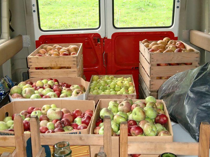 大量のリンゴ