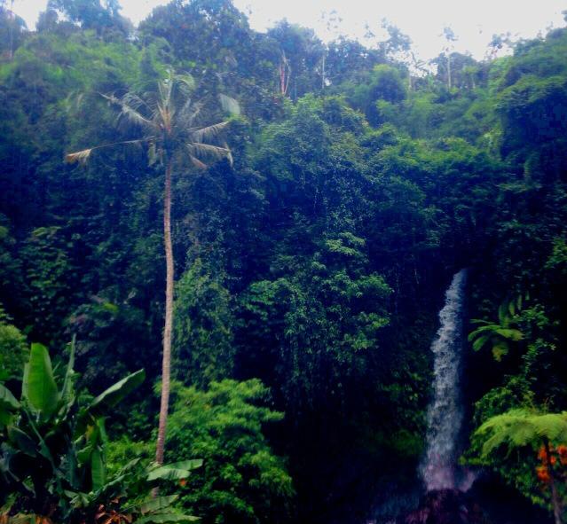 突然のジャングル