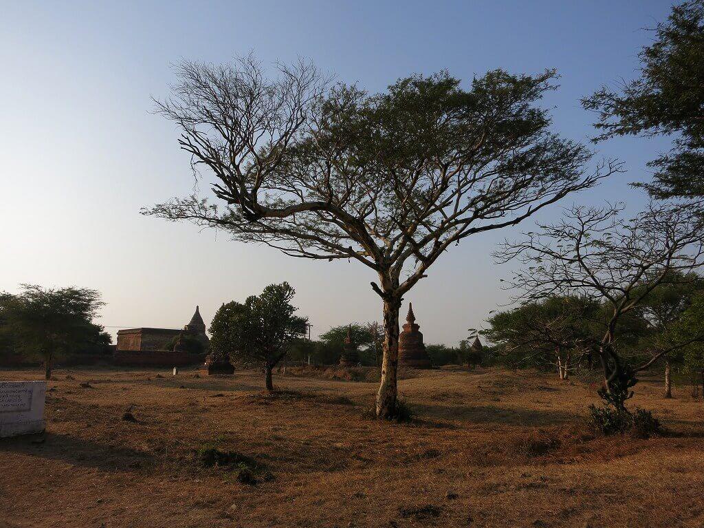 寺院までの道